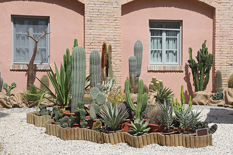 Photo of cactus garden on the side of desert home