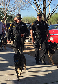 Photo of Tucson Police Officers walking K9 dogs at Canine Walk event